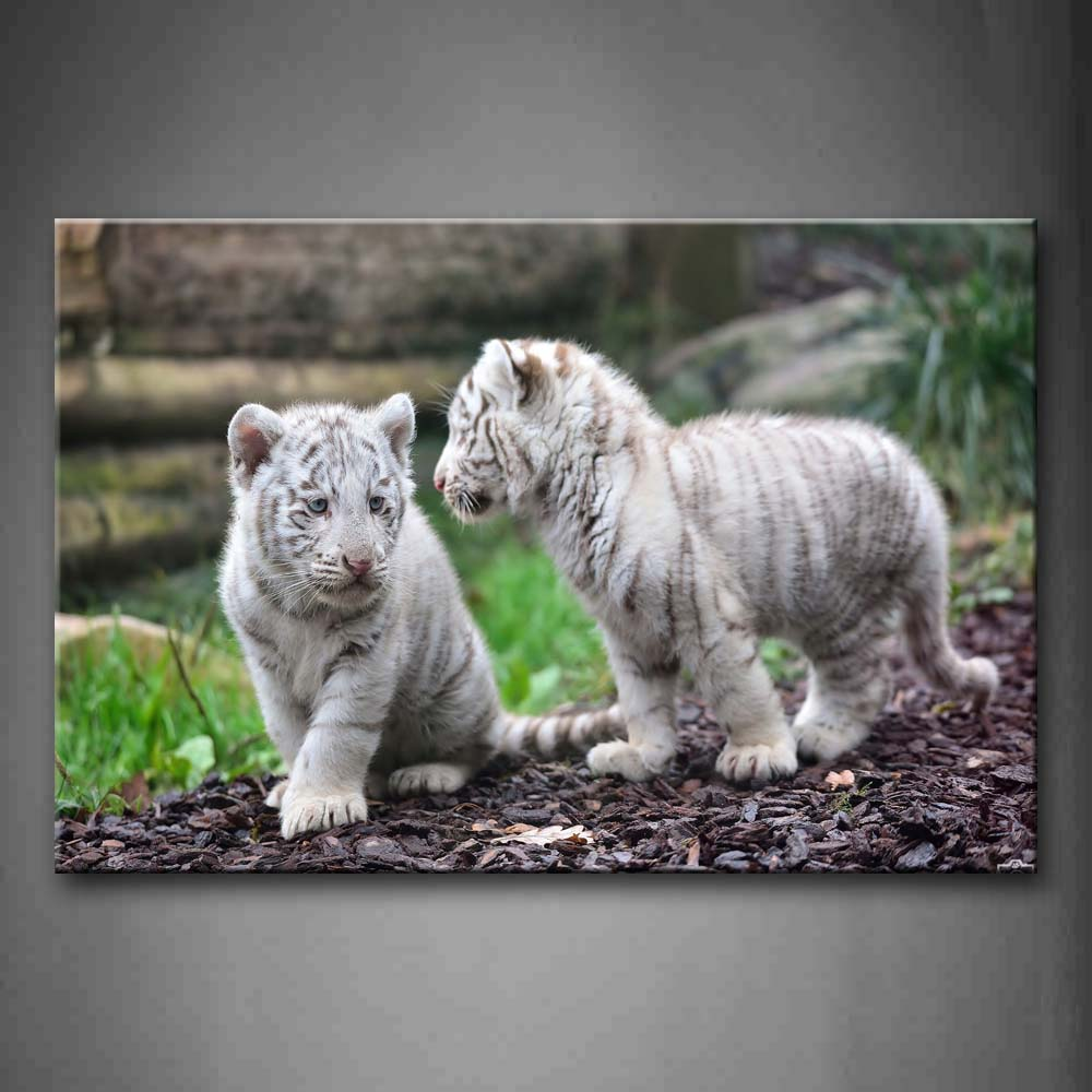 Framed Wall Art Pictures White Tiger Land Canvas Print Animal Modern Poster With Wooden Frame For Home Living Room DecorFramed Wall Art Pictures White Tiger Land Canvas Print Animal Modern Poster With Wooden Frame For Home Living Room Decor
