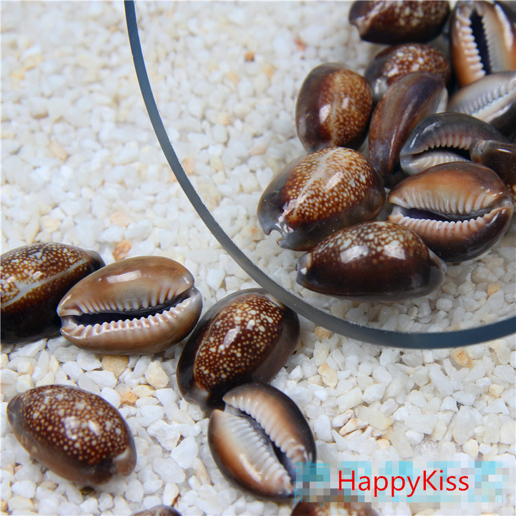 HappyKiss 5pcs /lot Natural Seashells Crafts To Stick  Toy  Wedding Party  Black Conch Big Natural Shells 2-3cm Home Decoration