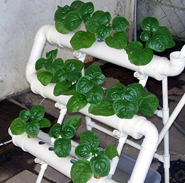 Period Flooding 21pcs Of Net Cup Hydroponics System Nft