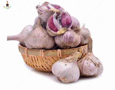 Hot Sale 100Pcs Garlic Bonsai Pure Natural And Organic Vegetable plants Healthy And Delicious Pungent Spice for home garden