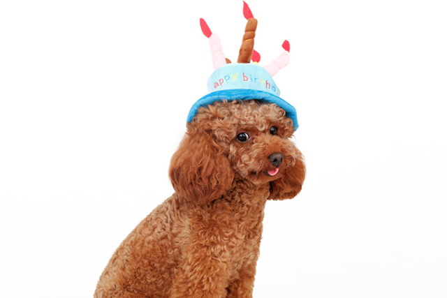 Cute Cat Dog Pet Happy Birthday Party Hat With 5 Colorful Candles