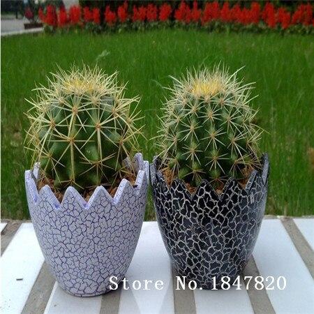 100pcs 10kinds mix Mini Cactus Echinocactus Seeds
