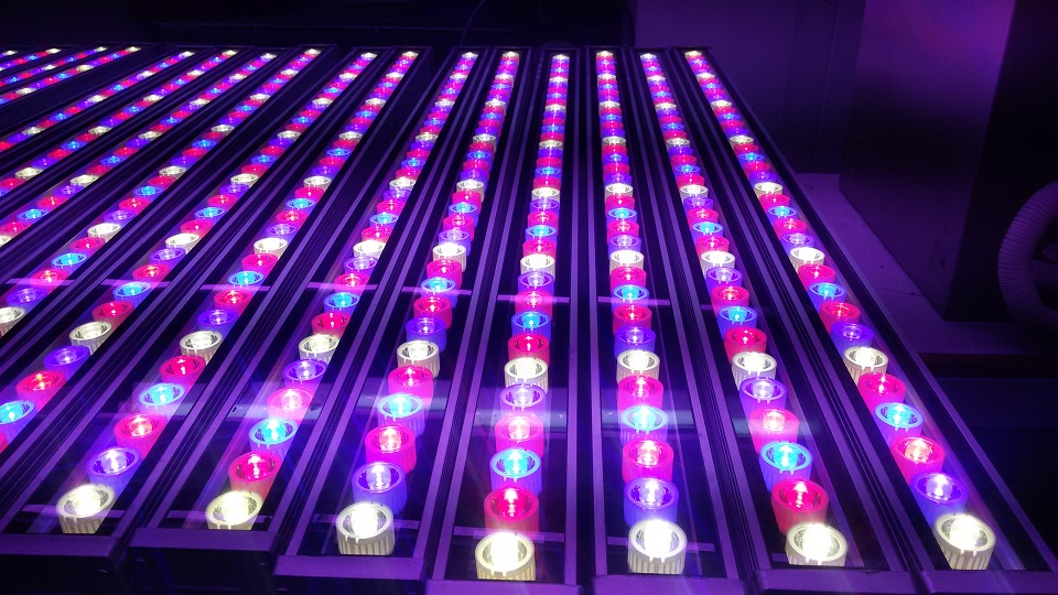 Us 342 0 10 Off New 72w Waterproof Horticulture Greenhouse Hydroponics Red Blue White Led Grow Lights For Tropical Plants Leaves And Fruiting In Led