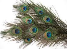 50 шт стебли павлиньих перьев длиной 12 дюймов с глазами около