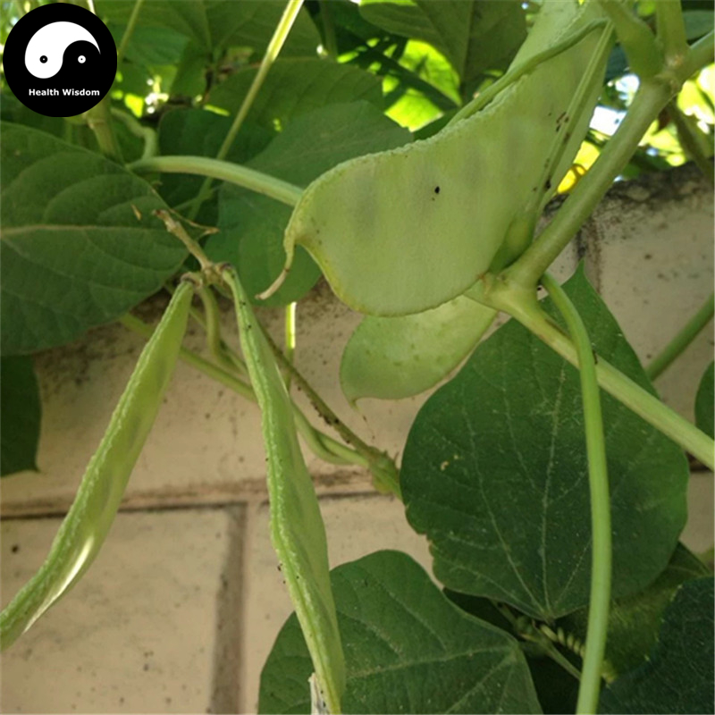 Buy Green Moon Beans Vegetable Semente 50pcs Plant Lentils Bean Lablab Purpureus ...