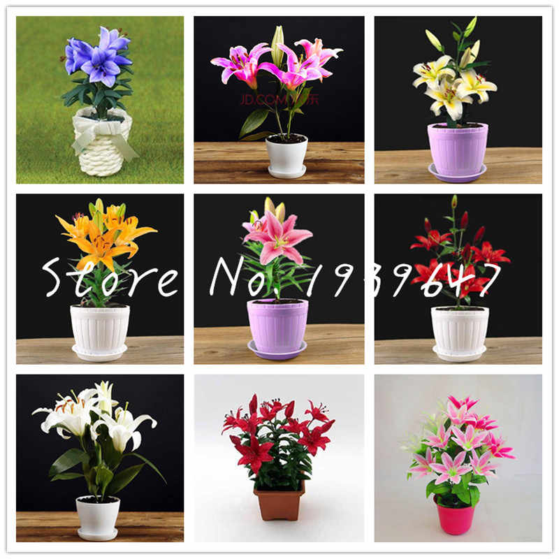 Hot sale 24 Colors Mini Lily Bonsai 100pcs Perfume Lily Bonsai (not Lily Bulbs) Bonsai Flower High Quality Plant For Home Garden