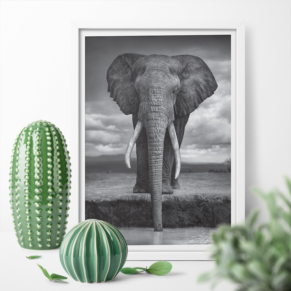 HD Print Black And White Elephant Pictures Poster Print Canvas Painting Aniaml Wall Art  ...