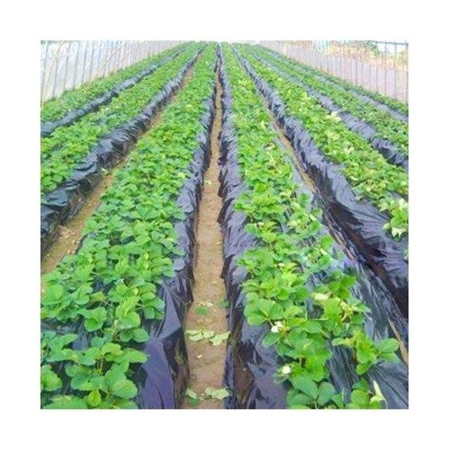 Hitam Warna Pertanian Film 1x400 Meters Strawberry PE Film Mulsa Film Plastik Rumah Kaca Taman Bunga