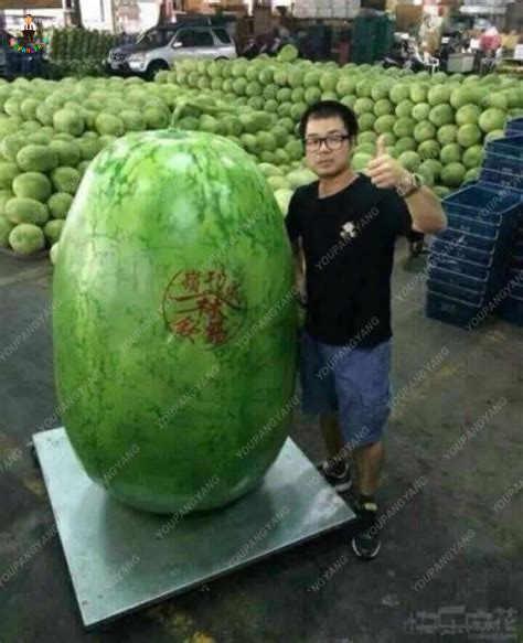 20 قطعة البطيخ العملاق بونساي الفواكه حديقة زراعة البطيخ الفواكه الصالحة للأكل ل ديكور حديقة المنزل