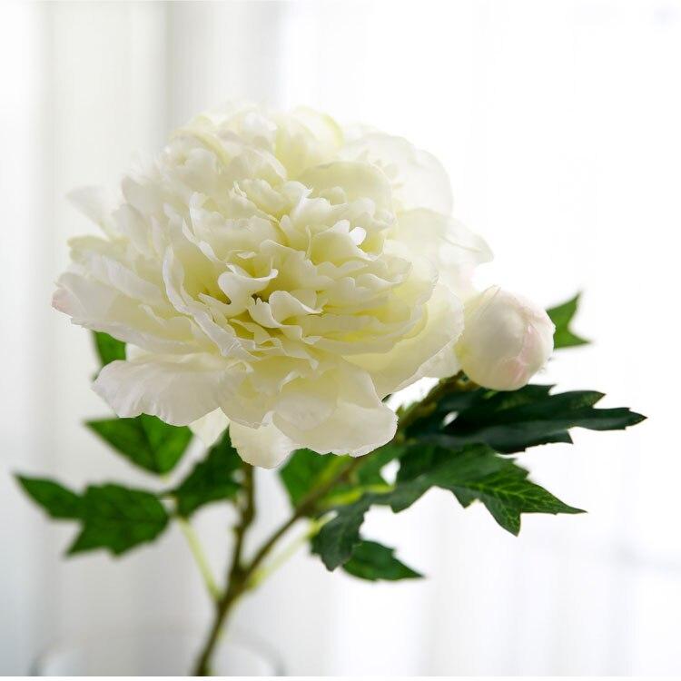 Peony flower (6)