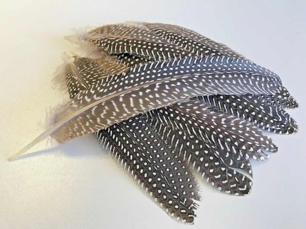 15-20 cm 6-8 inch 긴 날개 깃털 diy 공예 모자 액세서리에 대 한 기니 새 깃털을 발견