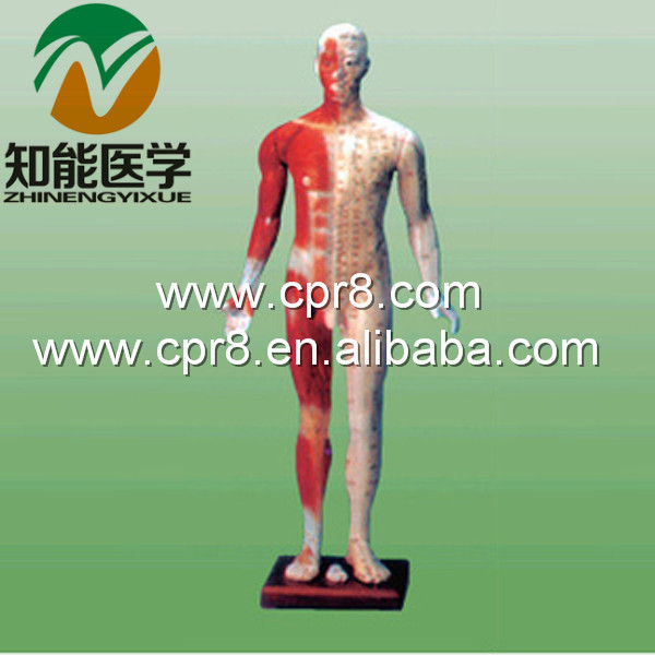 BIX-Y1003 The Standard Needle Acupuncture Point Model(170CM) WBW330 bix y1005 standard anatomical acupuncture model 60cm