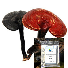 High Quality Ganoderma Lucidum Reishi Mushroom Extract Powder ling zhi Ganoderma lucidum extract Good quality, free shipping