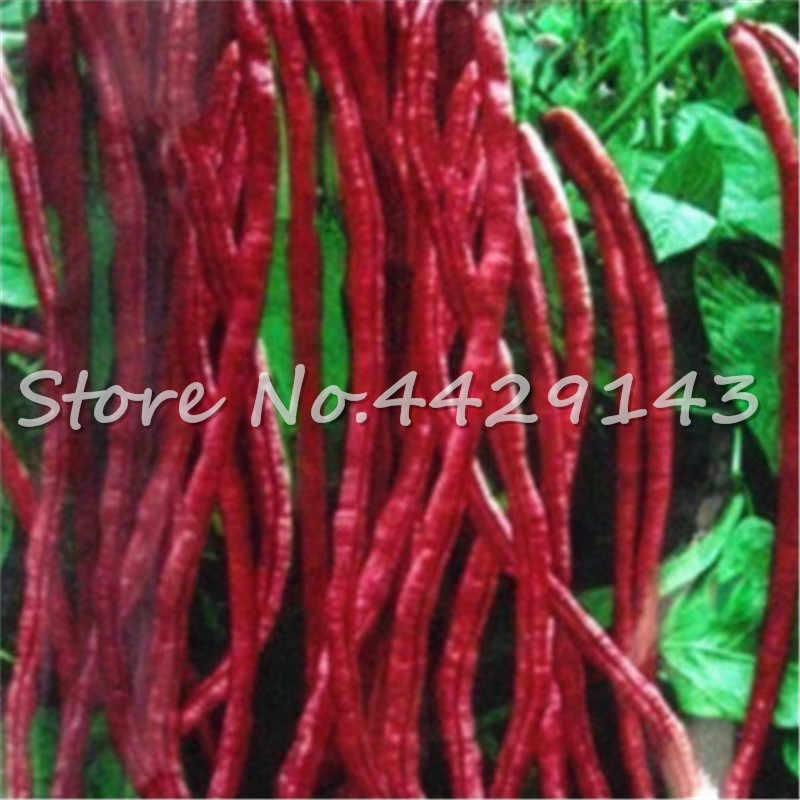 30 unids/bolsa grano largo chino Vigna Unguiculata bonsái, planta de verduras de frijol de serpiente con podado largo, flores de frijol largo de jardín