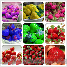 6 Packs Rare Hybrid Edible Purple Yellow Pink Blue Green Red Giant Strawberry Bonsai Plant, Professional Pack, 600 Pcs/Bag centrifuge tubes test tube rack polypropylene blue green pink yellow orange pack of 5 pcs