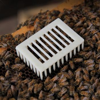 10 sztuk sprzęt pszczelarski queen bee klatki w dawnej celi klatki z tworzywa sztucznego hodowli new bee system akcesoria akcesoria narzędzia pszczelarskie tanie i dobre opinie pledge agro XQ-108