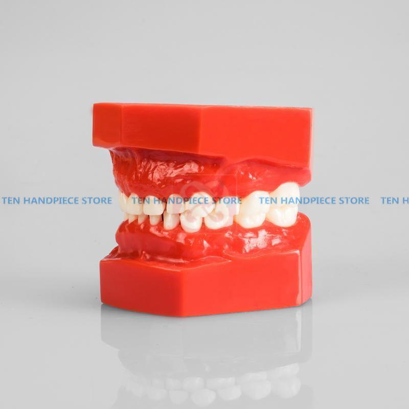 2019 good quality Child tooth model deciduous tooth model dental model dental pediatric teaching model2019 good quality Child tooth model deciduous tooth model dental model dental pediatric teaching model
