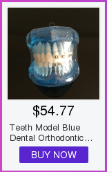 Cheap Modelo de Ensino Dental