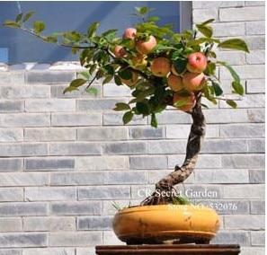 яблоко купить на алиэкспресс