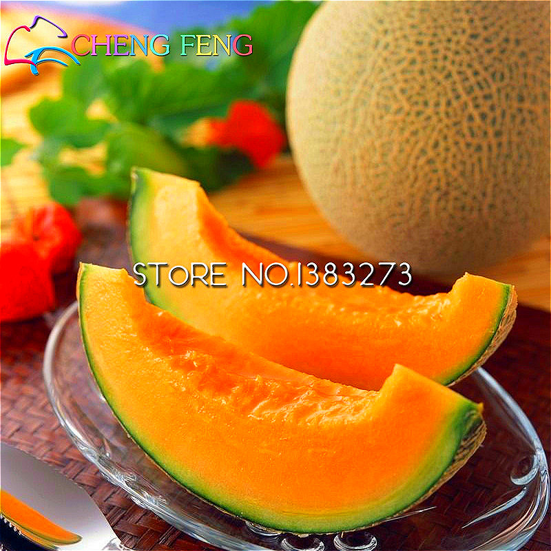 2016 New 20pcs Rare Muskmelon Seed Giant Cantaloupe Sweet And Delicious Very Easy Plant Garden Vegetable Gift For Home Garden