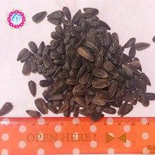 40 pcs / bag mini sunflower seeds Dwarf sunflower seeds sunflower series height 40cm Flower Seeds plant for home garden supplies