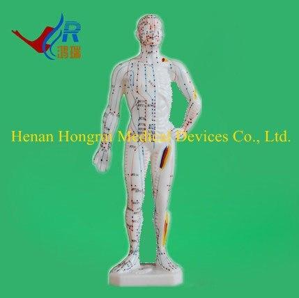 Erweiterte human ganzen körper akupunktur modell 26 CM in Erweiterte ...