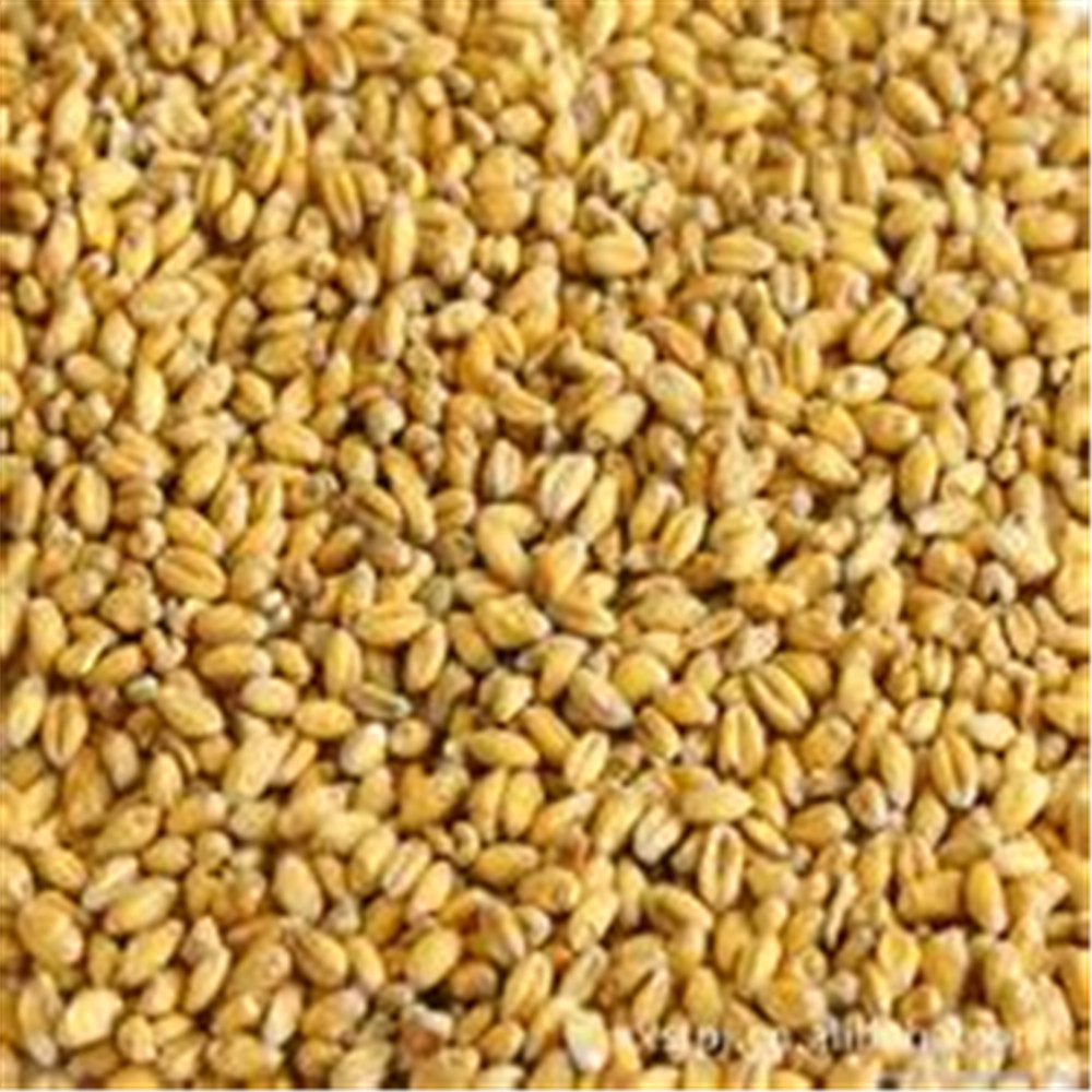 200g High Quality Natural Barley Malt Extract Hordenine