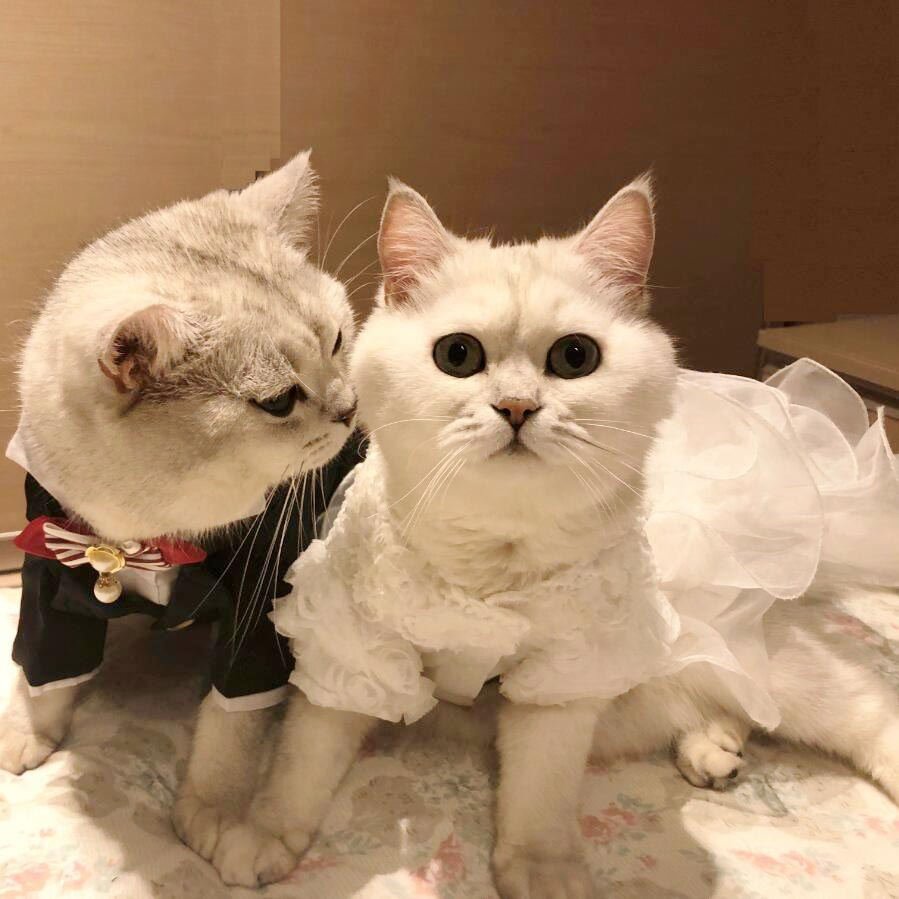 Small Cat Wedding Dresses Princess Dog Cat Skirt  Pet Clothing Small Dog Clothes Tuxedo skirt for Bride Bridegroom