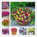 100 sementes/pack, Mix Garden Petúnia Peteca Chifre Flor Bonsai Semente De Flor, # QIF50E