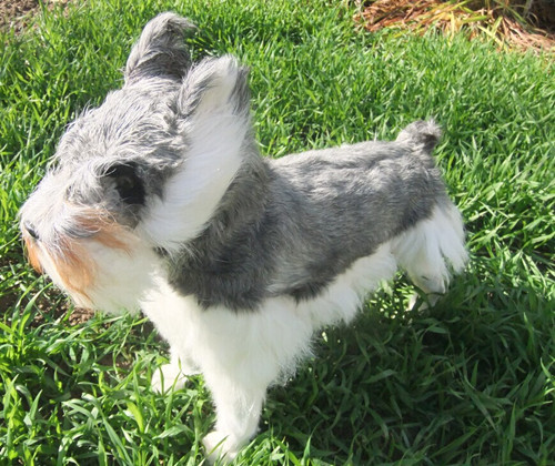 simulation cute Schnauzer 48x42cm model polyethylene&furs dog model home decoration props ,model gift d449 стоимость