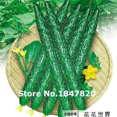 Wholesale 100pcs long fruit cucumber seeds , Green vegetable Seeds, flower plants bonsai,free shipping