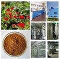 Top quality 100g Peru Black Maca extract powder / Lepidium meyenii Free shipping