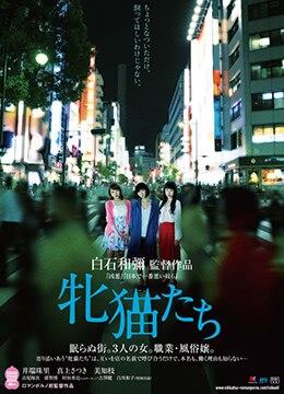 《雌猫们》2017年日本情色电影在线观看