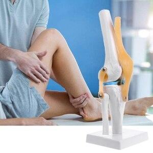 Image 5 - Tıbbi sahne modeli insan anatomik diz eklemi esnek iskelet modeli tıbbi öğrenme yardımı anatomisi