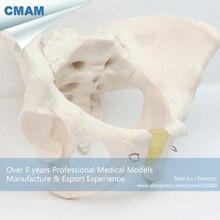12340/Размер жизни женский таз анатомическая модель скелета, медицинская научная образовательная учебная анатомическая модель