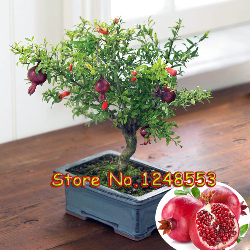 20pcs/ bag, bonsai pomegranate seeds, very sweet Delicious fruit seeds, succulents Tree seeds, bonsai plant for home & garden pot
