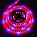 5050 LED Strip Flexible Tape Grow Plant Light 4 Red 1 Blue Aquarium Greenhouse Hydroponic Growing Lamp 60led//m 1M 2M 4M 5M