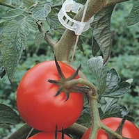100 قطعة/الوحدة الطماطم حديقة النبات دعم مقاطع ل تعريشة خيوط الدفيئة الطماطم الخضروات حديقة النباتات كليب|دعامات وأقفاص النباتات|   -