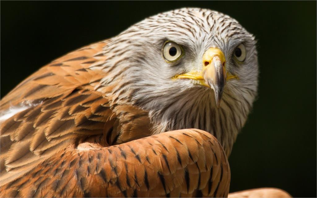 ᑎ‰Animal pájaro depredador ojos plumas halcón Sala hogar pared arte ...
