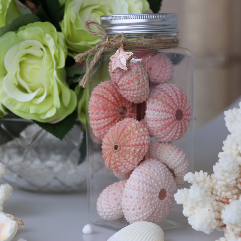 Gratis frakt (1 flaska / mycket) Naturlig liten rosa havsurchinflaska Set Naturlig Shell & Conch Beach Bröllop & Fest & Holiday Decor