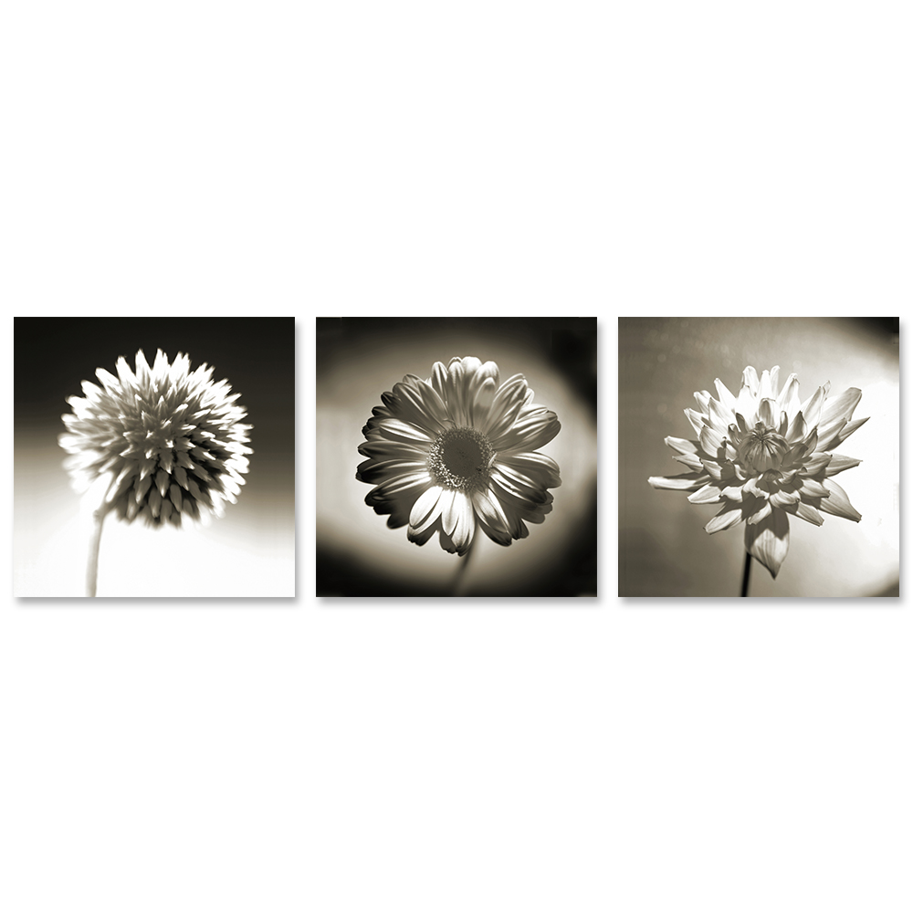 Wall Art Black And White Flower Pictures 3 Panel Oil Painting Canvas