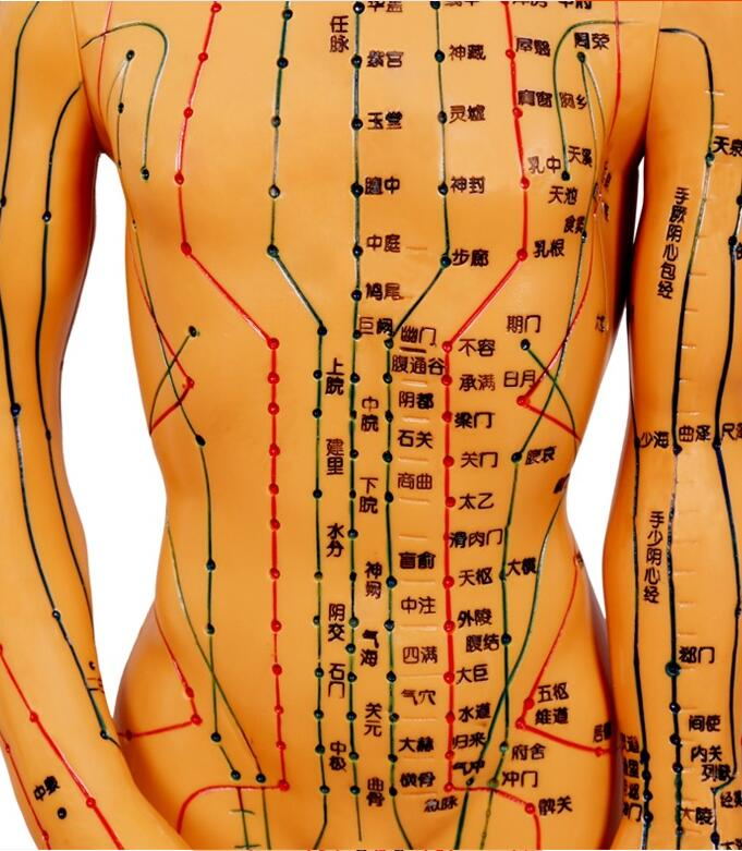 48CM FeMale Lettering acupuncture point body mannequin of acupuncture Medical Research massage reflex zone teaching model C518 in Mannequins from Home Garden