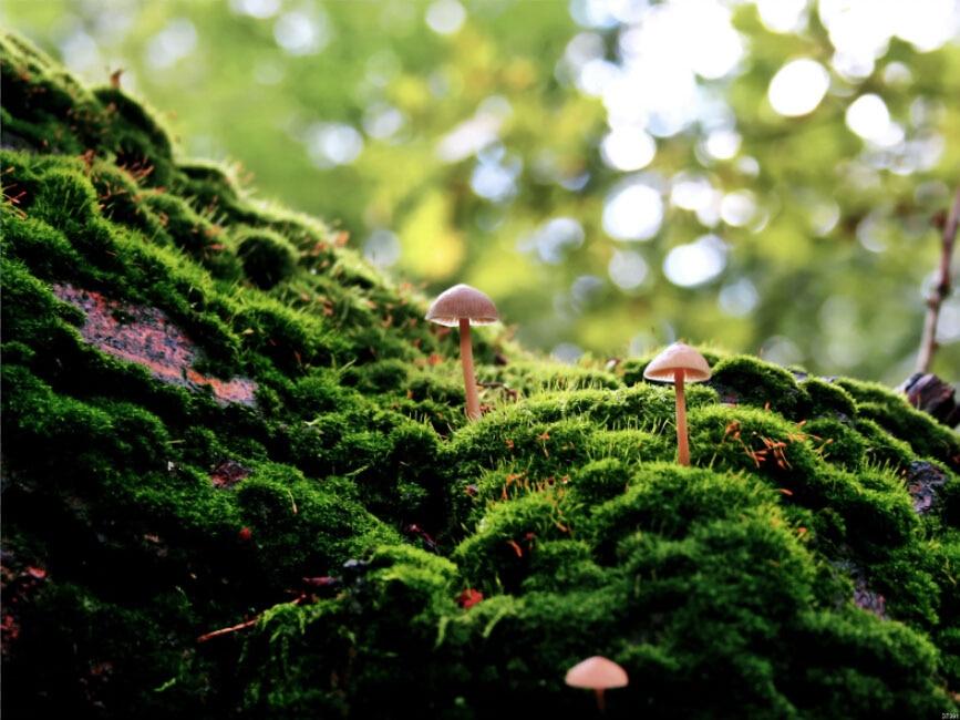 「苔 美しい」の画像検索結果