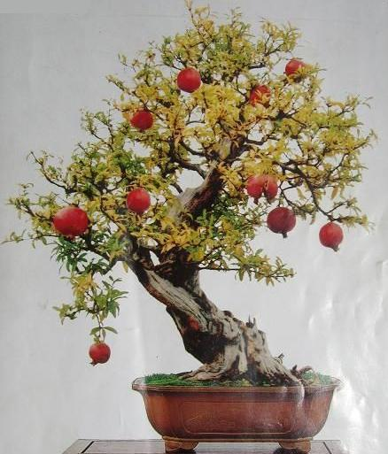 online buy wholesale bonsai pomegranate tree from china bonsai, Natural flower