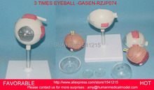 MEDICAL ANATOMY MODEL 3X LIFE-SIZE 6-PARTS EYES ANATOMICAL MODEL, EAR-EYE-NOSE-THROAT MODELS  EYE MODELS-GASEN-RZJP074