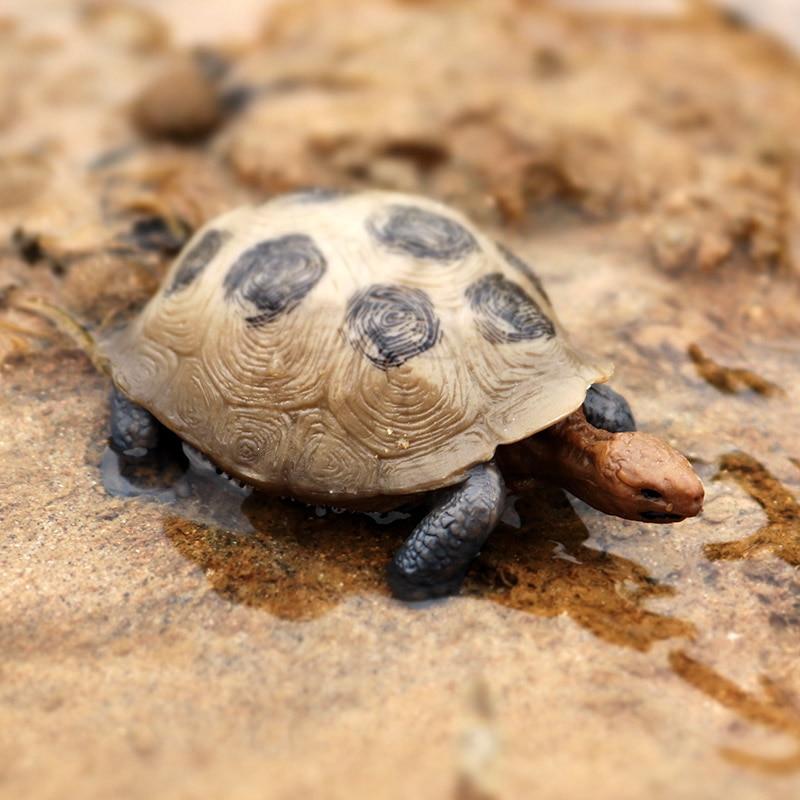 PL127-517陆龟