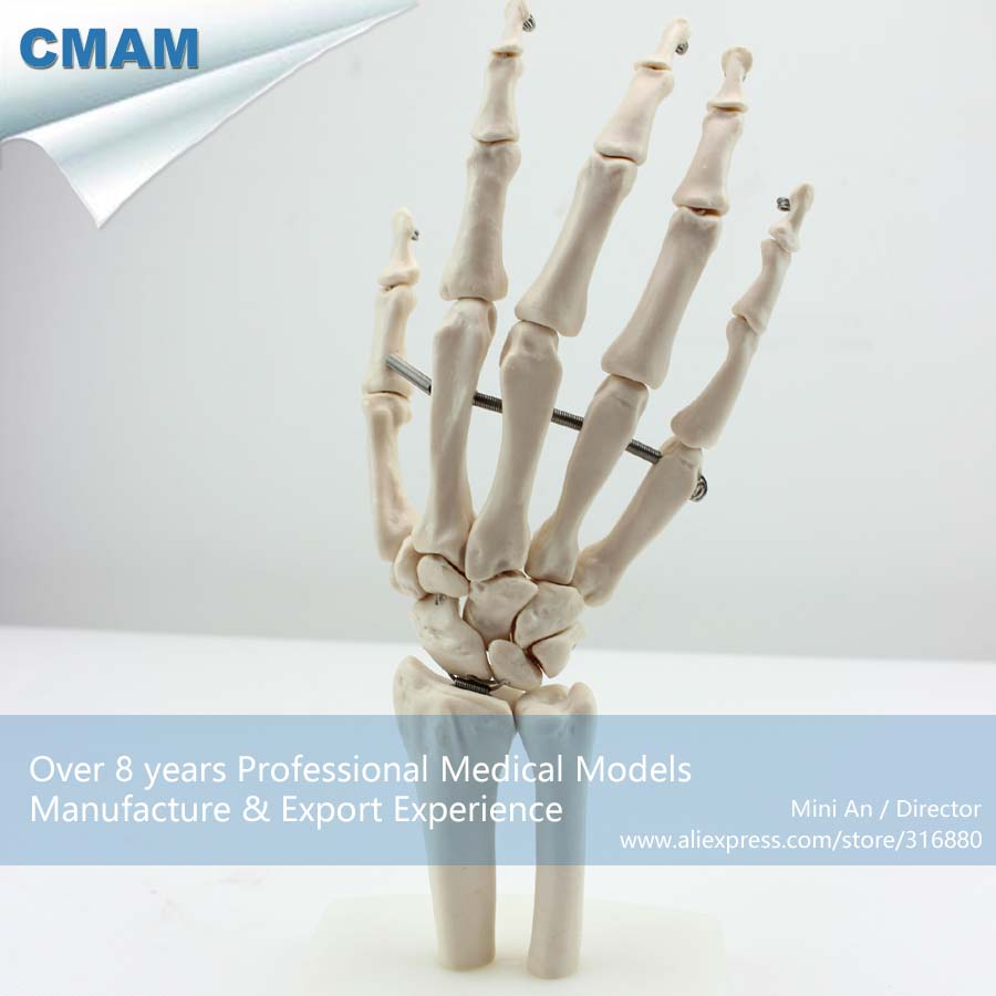 No. 12349 , Hand Bone, Medical Science Didactic Joint and Extremities Model , CMAM china medical anatomical models no 12314 hip and femur bone model of orthopedics implantation practice cmam china medical anatomical models