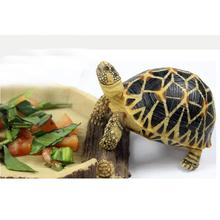 Food Water Dish Bowl Feeder Tray Terrarium Decor for Reptile Tortoise Turtle Snake 16x15x2.5cm