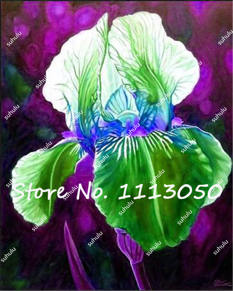 100pcs Rare Color Iris Seedsiris Flowerbonsai Flower Seeds24