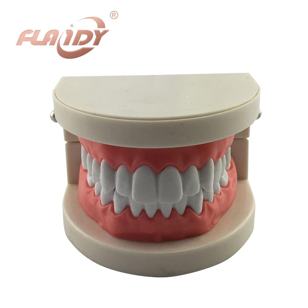 стоматологических зубы модели